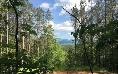 Ellijay Residential Lots & Land For Sale: 352 Eastside