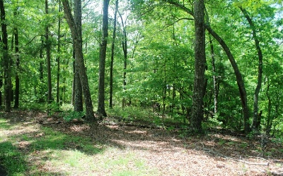 Mineral Bluff Residential Lots & Land For Sale: L 41 Hunter's Ridge