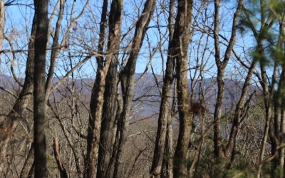 Ellijay Residential Lots & Land For Sale: Flagpole Road-Tr F1