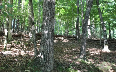 Ellijay Residential Lots & Land For Sale: Bowline Dr - Lot 98