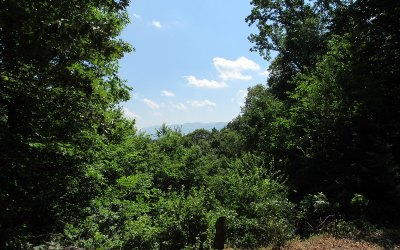 Ellijay Residential Lots & Land For Sale: Tr C Flat Branch Road