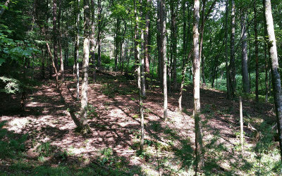 Ellijay Residential Lots & Land For Sale: L493 Chicasaw Drive