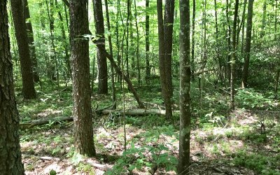 Ellijay Residential Lots & Land For Sale: Lt33 Trout Drive