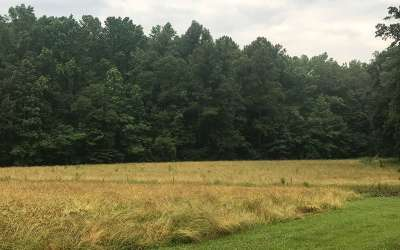 Ellijay Residential Lots & Land For Sale: 1547 Chatsworth Highway