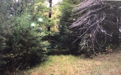 Ellijay Residential Lots & Land For Sale: 8.08a White Pine Way