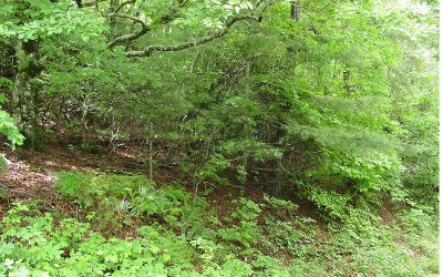 Residential Lots & Land For Sale: Arrowhead Estates