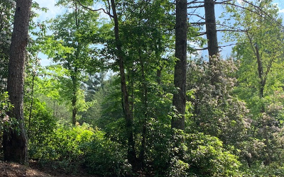 Hayesville Residential Lots & Land For Sale: Lot 6 White Pine Ridge