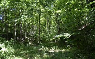 Residential Lots & Land For Sale: 130 Apple Country Lane
