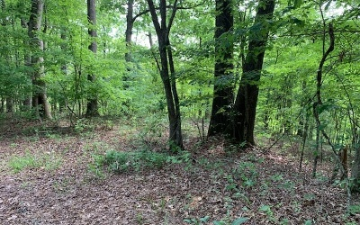Mineral Bluff Residential Lots & Land For Sale: # 28 Wolf Creek Estates