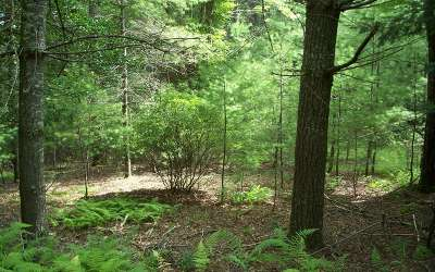 Suches Residential Lots & Land For Sale: Lot 1 Poplar Dr.