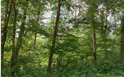 Ellijay Residential Lots & Land For Sale: Graham Court