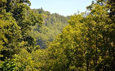 Hayesville Residential Lots & Land For Sale: Chestnut Gap