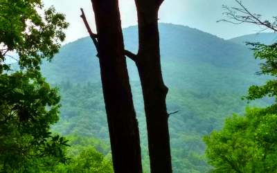 Ellijay Residential Lots & Land For Sale: Tr G Fox Mountain Rd.