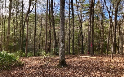 Ellijay Residential Lots & Land For Sale: Lt485 Chicasaw Dr