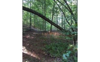 Fannin County Residential Lots & Land For Sale: Lt 91 Laurel Branch