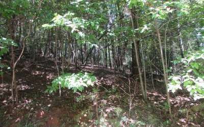 Ellijay Residential Lots & Land For Sale: 451 Apache Court