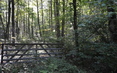 Ellijay Residential Lots & Land For Sale: 9, 10 Dickerson Dr