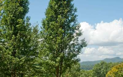 Hayesville Residential Lots & Land For Sale: Lt 11 Bethabara View
