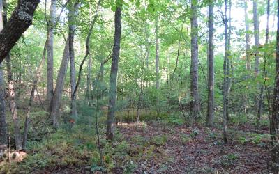 Mineral Bluff Residential Lots & Land For Sale: L2b-2 Sassafras Drive