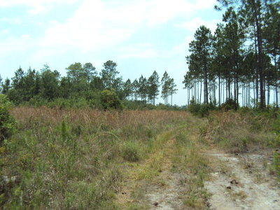 Waycross Residential Lots & Land For Sale: Jimmy Howell Rd