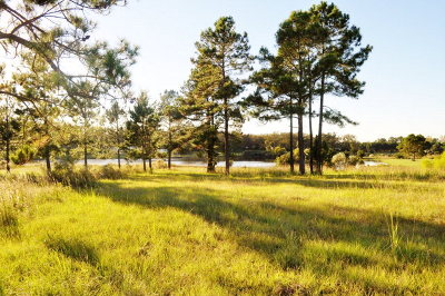 Fitzgerald, Tifton, Ashburn, Ocilla, Albany, Baconton, Lenox, Omega, Abbeville, Alapaha, Cordele, Oakfield, Ray City, Norman Park, Sparks, Chula, Vienna, Arabi, Cobb, Rochelle Residential Lots & Land For Sale: Multiple Lots-Sparrow Lake Estate