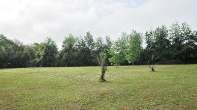 Residential Lots & Land For Sale: 48 Eleanor Place