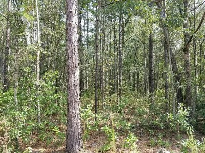Berrien County, Lanier County, Lowndes County Residential Lots & Land For Sale: Tbd Paul King Road