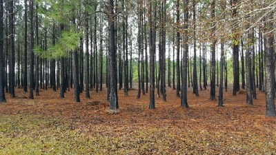 Berrien County Residential Lots & Land For Sale: Lot Shady Tree Circle