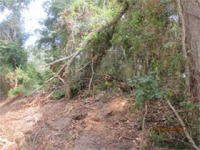 Brooks County Residential Lots & Land For Sale: Lot 12 Blease Road