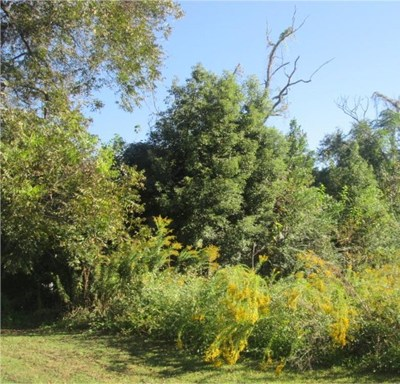 Brooks County Residential Lots & Land For Sale: 1104 S. Culpepper St.