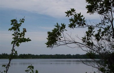 Berrien County, Lanier County, Lowndes County Residential Lots & Land For Sale: Lot #12 Lake Alapaha