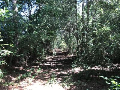 Berrien County, Lanier County, Lowndes County Residential Lots & Land For Sale: 40.27 Ac McNeal Road