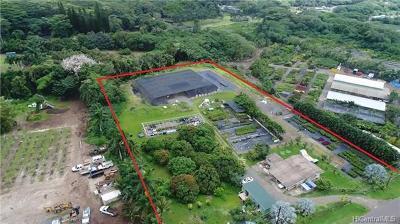Waimanalo Single Family Home For Sale: 41-955 Kakaina Street