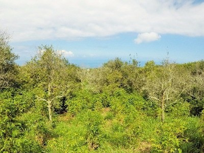Kainaliu HI Residential Lots & Land For Sale: $380,000