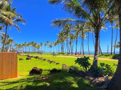 Commercial For Sale: 4-1520 Kuhio Hwy