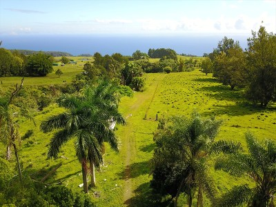 Hawaii County Residential Lots & Land Contingent: 36-570 Spencer Rd