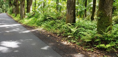 Hawaii County Residential Lots & Land For Sale: Old Government Rd