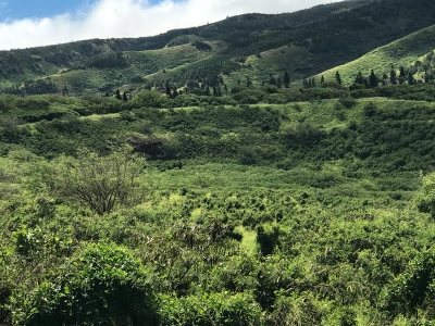 Wailuku Residential Lots & Land For Sale: 2100 Honoapiilani