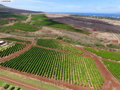 Lahaina HI Residential Lots & Land For Sale: $839,000