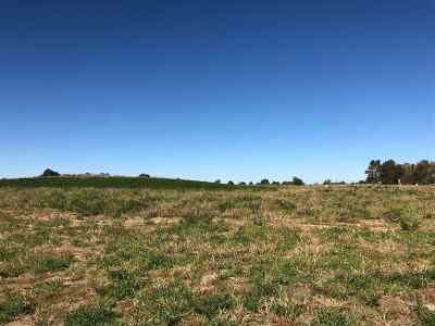North Liberty Residential Lots & Land For Sale: Lot 21 Mickelson 1st Addition