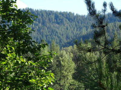 Priest River Residential Lots & Land For Sale: NNA Bear Rd.