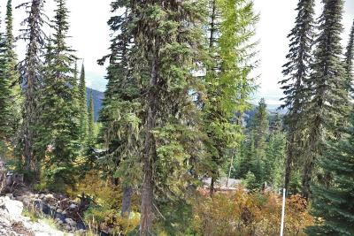Sandpoint Residential Lots & Land For Sale: NNA Tall Timber B3l4