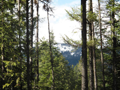 Sandpoint Residential Lots & Land For Sale: Lot 11 Rock Dome Rd
