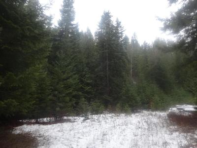 Priest River Residential Lots & Land For Sale: 3958 Old Priest River Rd