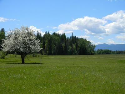 Sandpoint Residential Lots & Land For Sale: 1768 Grouse Creek Rd