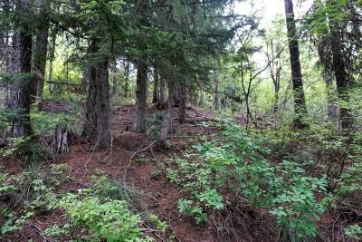 Sandpoint Residential Lots & Land For Sale: NNA Parallel Run Lot 8