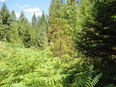 St. Maries ID Residential Lots & Land For Sale: $199,000