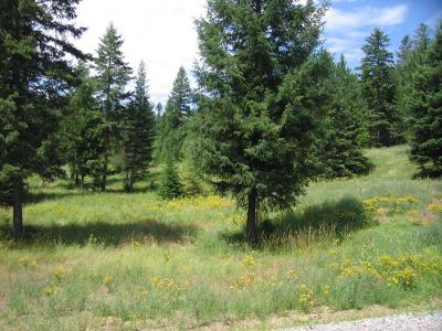 Rathdrum Residential Lots & Land For Sale: L3B4 Roanoak Rd