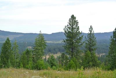 Benewah County Residential Lots & Land For Sale: NKA Hodgson Rd