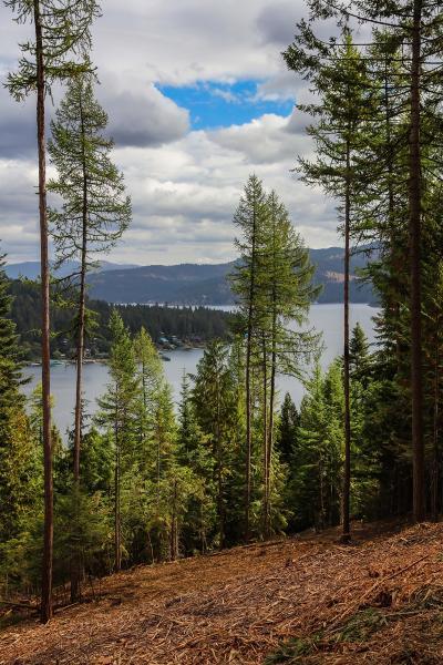 Coeur D'alene Residential Lots & Land For Sale: Trekker Woods Rd